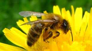 join-friends-of-the-earth-great-british-bee-count